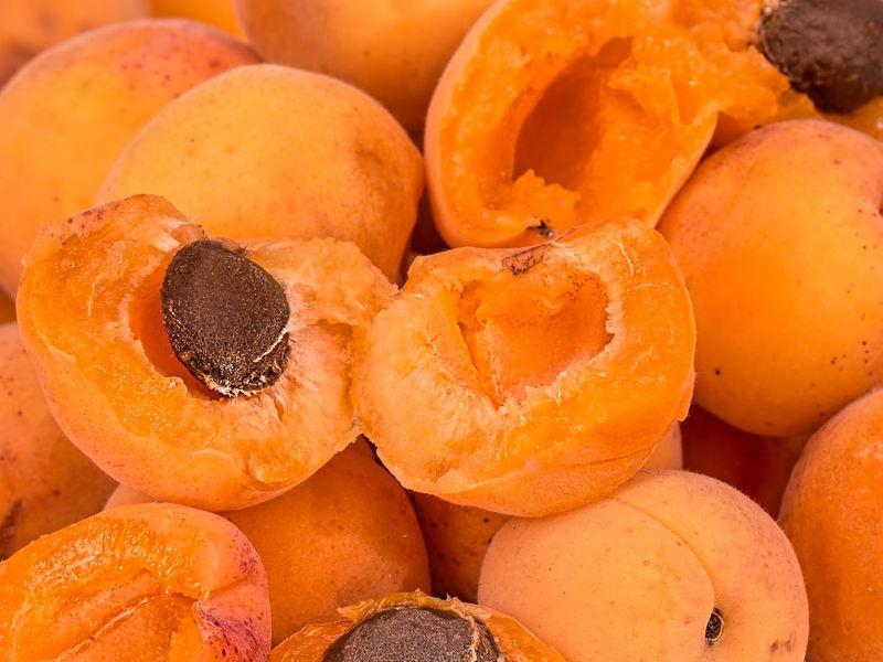 Damasco - Prunus armeniaca