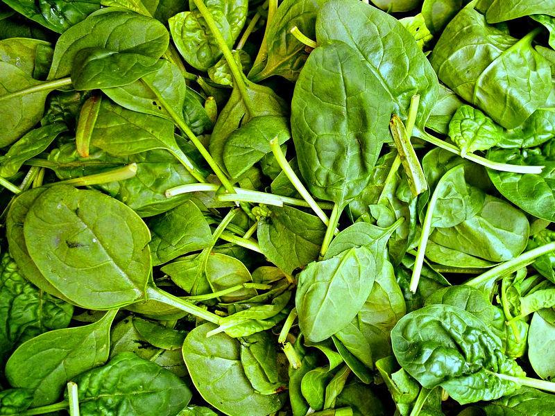 Espinafre - Spinach oleracea