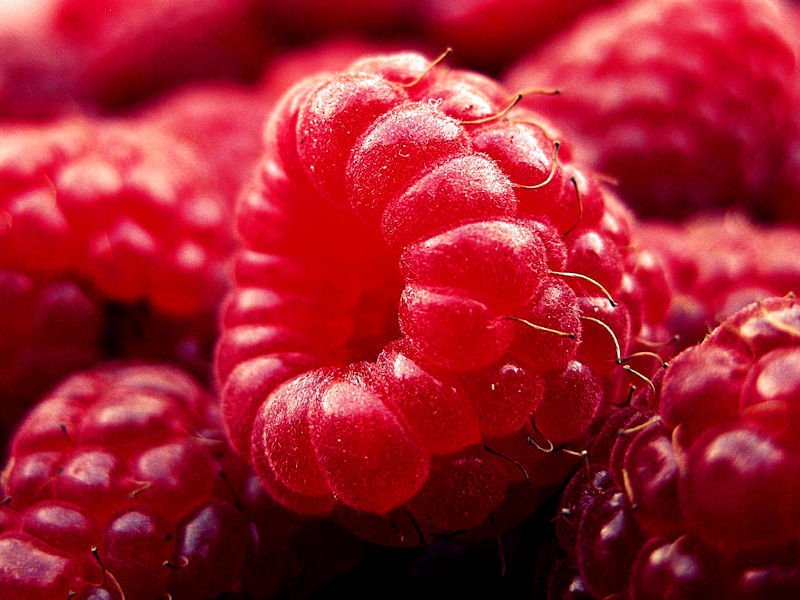 Framboesa - Rubus idaeus